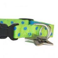 paw-stars-charlie-puppy-collar-02
